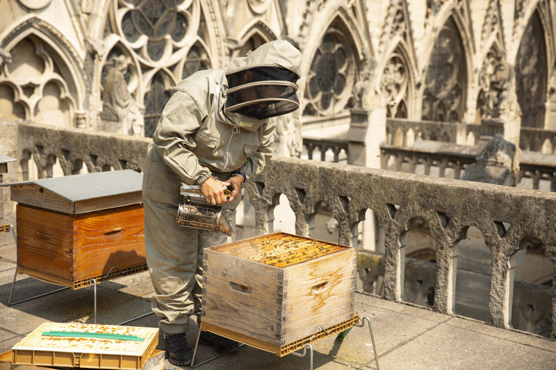 The People Keeping Bees on Paris's Most Famous Landmarks
